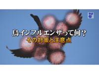鳥インフルエンザって何? その対策と注意点