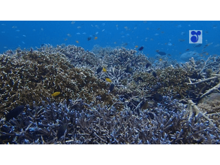 """""""海の熱帯林"""" サンゴ礁を守る~私たちができること~"""