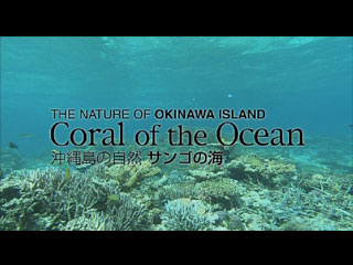 Coral of the Ocean